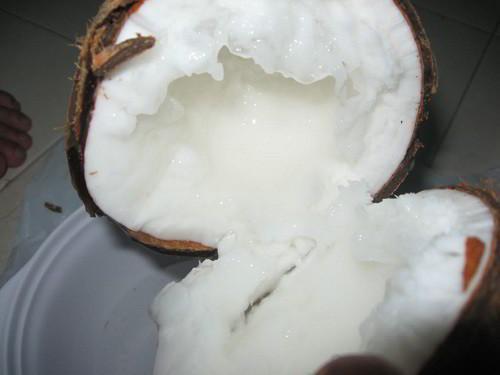 dừa sáp Trà Vinh