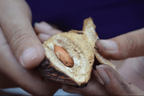 mứt hạt bàng đặc sản Vũng Tàu