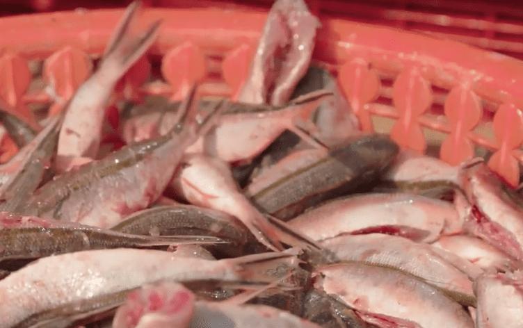 Chả cá Củ Đỏ Lý Sơn