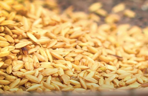 cách làm hạt cốm dẹp-4